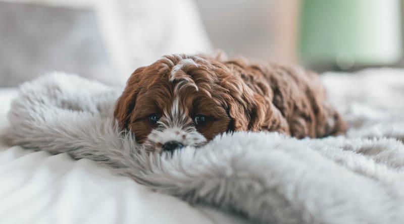 Anxiety Relief Sleep Better Enjoy Life