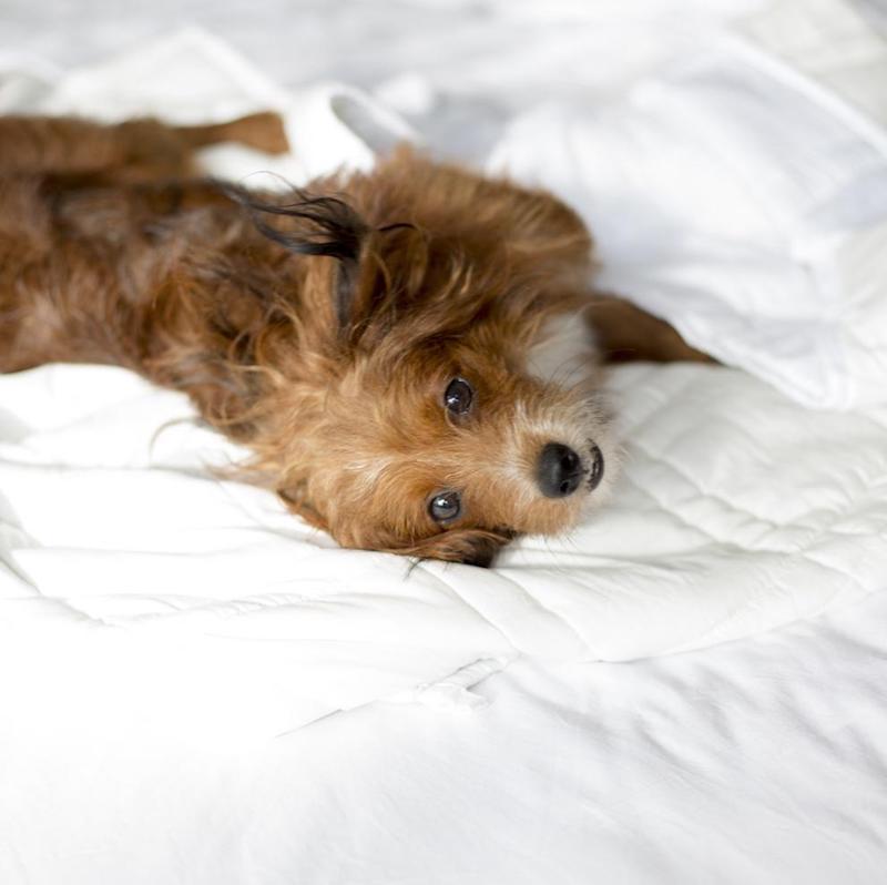 Baloo Blanket For PEts